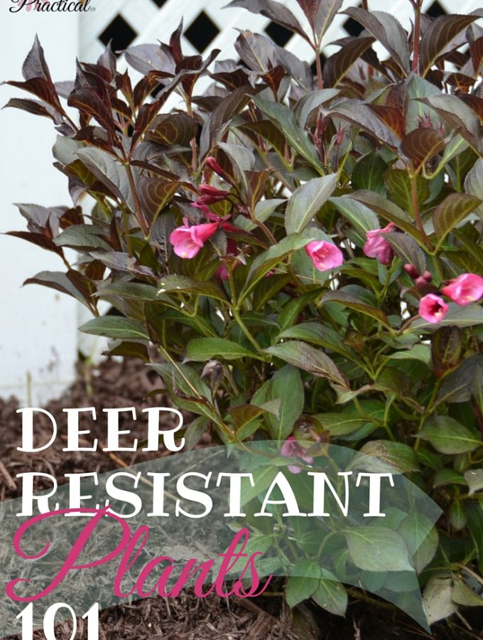 Can Deer Resistant Plants Promise a Lush Summer Garden?