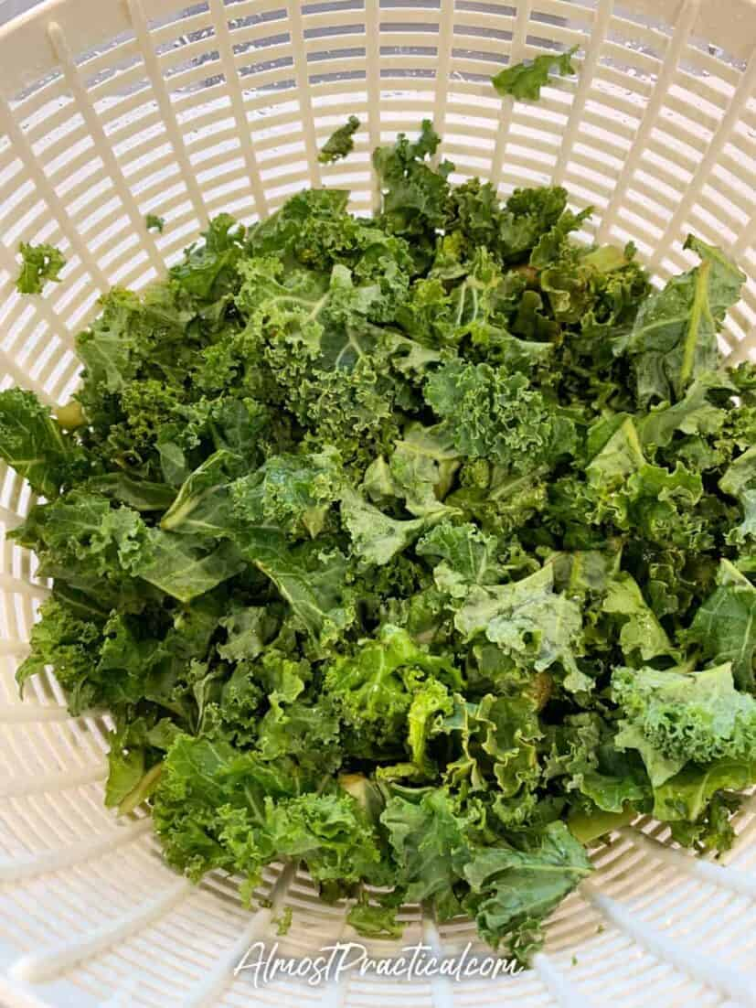 Washed kale pieces in a salad spinner.